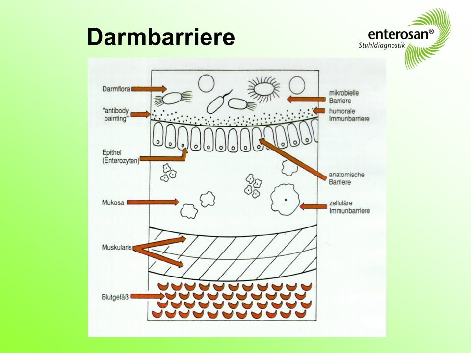 Darmbarriere