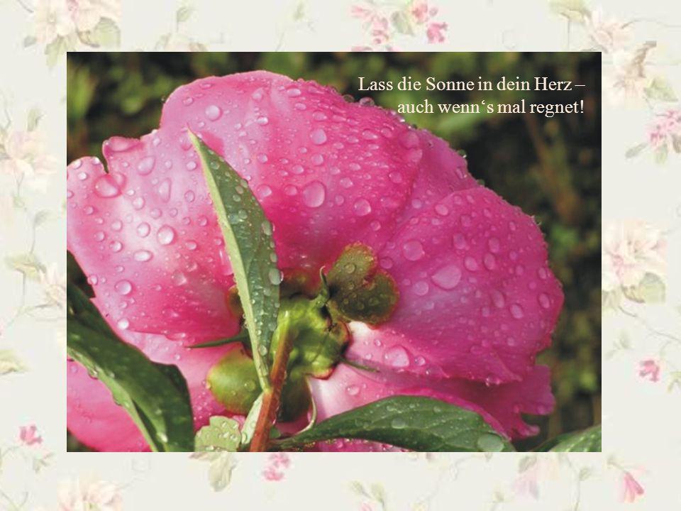 Lass die Sonne in dein Herz – auch wenn's mal regnet!