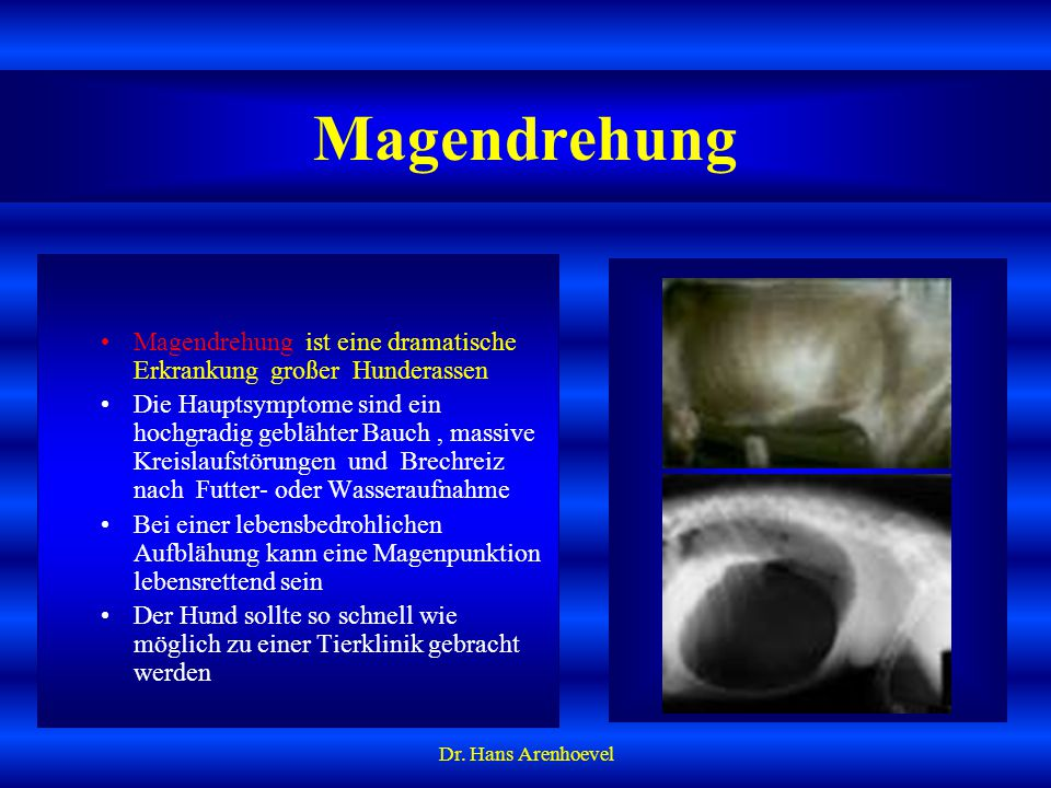 Magendrehung Magendrehung ist eine dramatische Erkrankung großer Hunderassen.