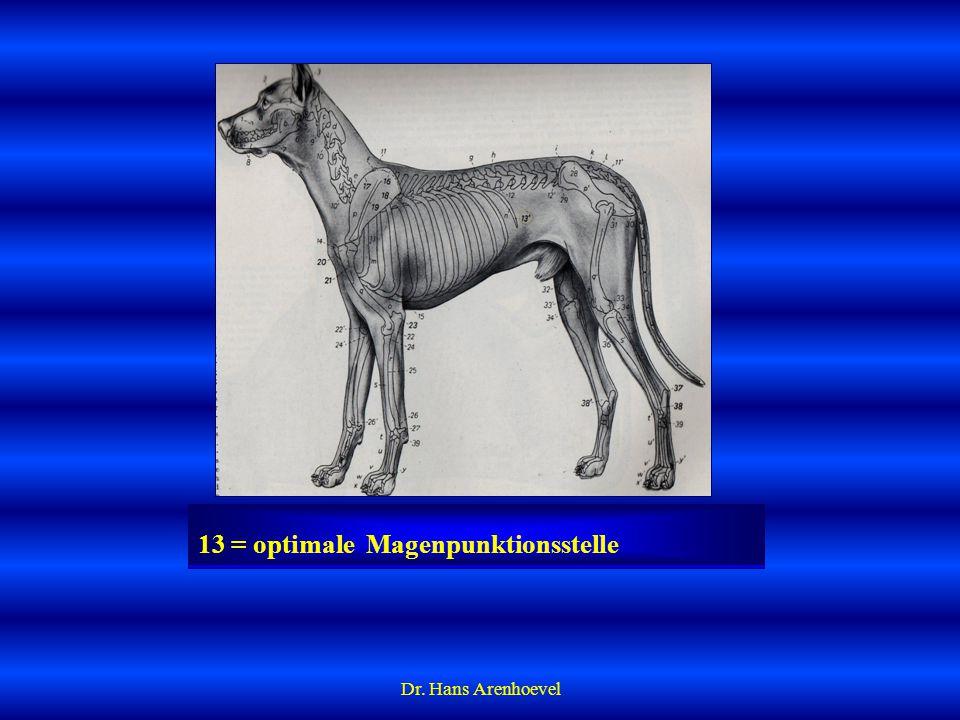 13 = optimale Magenpunktionsstelle