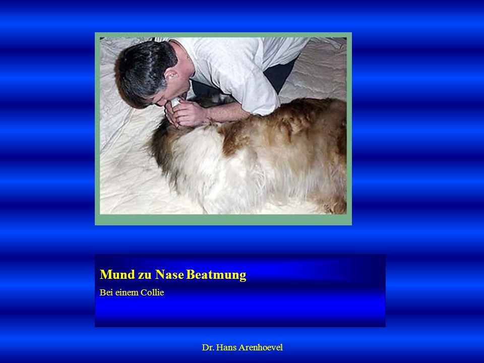 Mund zu Nase Beatmung Bei einem Collie Dr. Hans Arenhoevel