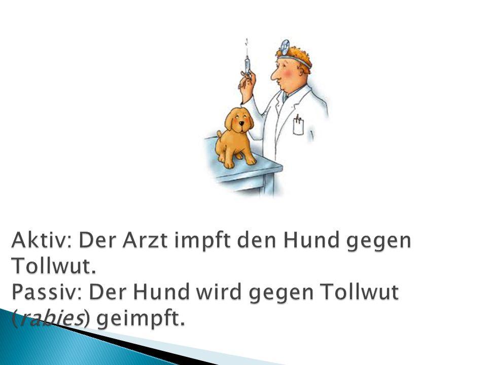 Aktiv: Der Arzt impft den Hund gegen Tollwut