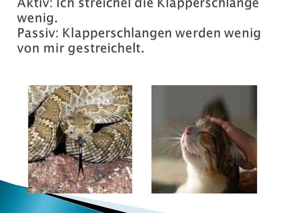 Aktiv: Ich streichel die Klapperschlange wenig