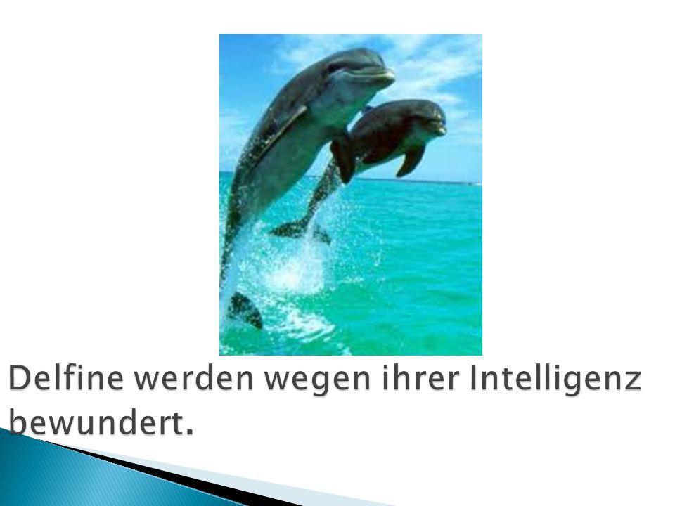 Delfine werden wegen ihrer Intelligenz bewundert.