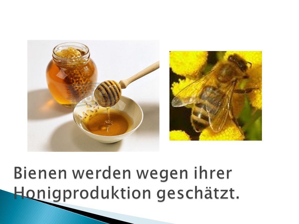 Bienen werden wegen ihrer Honigproduktion geschätzt.