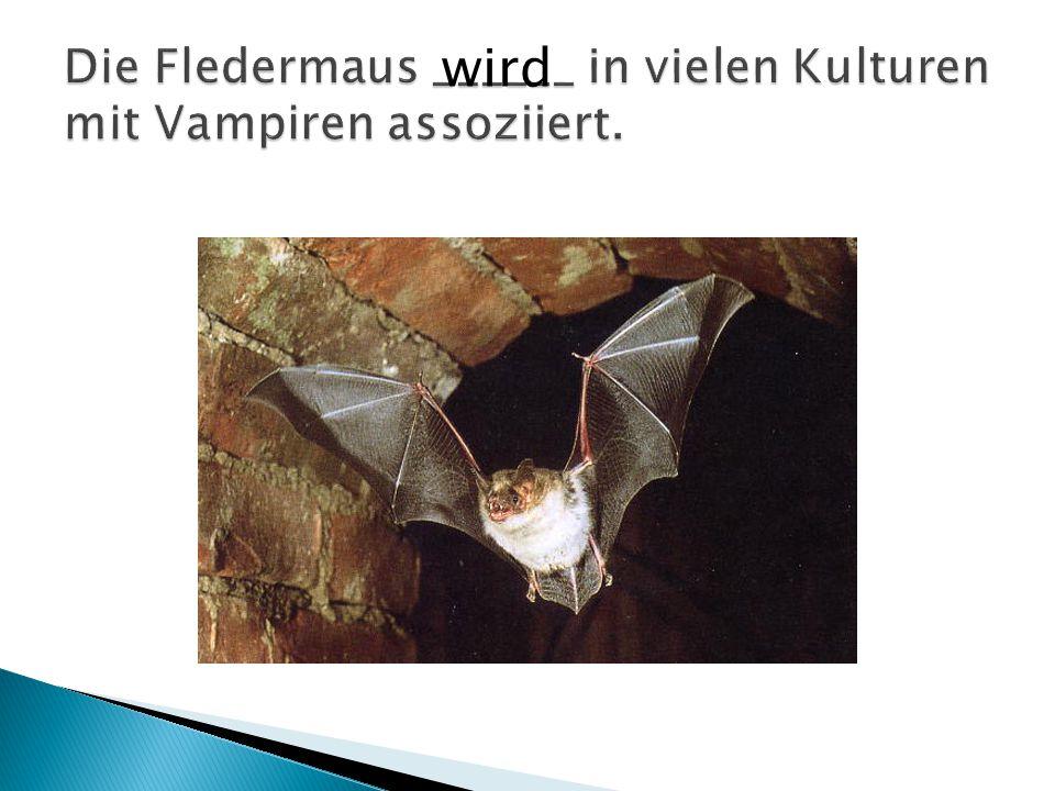 Die Fledermaus ______ in vielen Kulturen mit Vampiren assoziiert.