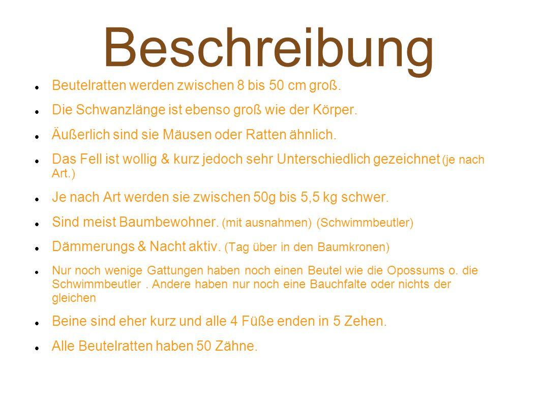 Beschreibung Beutelratten werden zwischen 8 bis 50 cm groß.