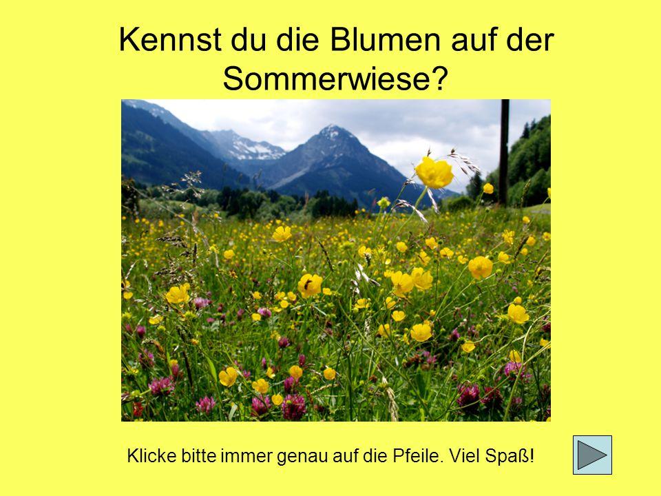 Kennst du die Blumen auf der Sommerwiese