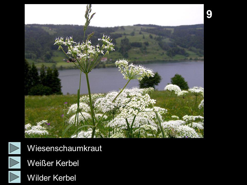 9 Wiesenschaumkraut Weißer Kerbel Wilder Kerbel