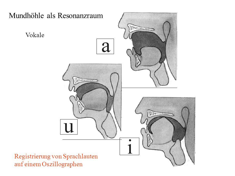Mundhöhle als Resonanzraum