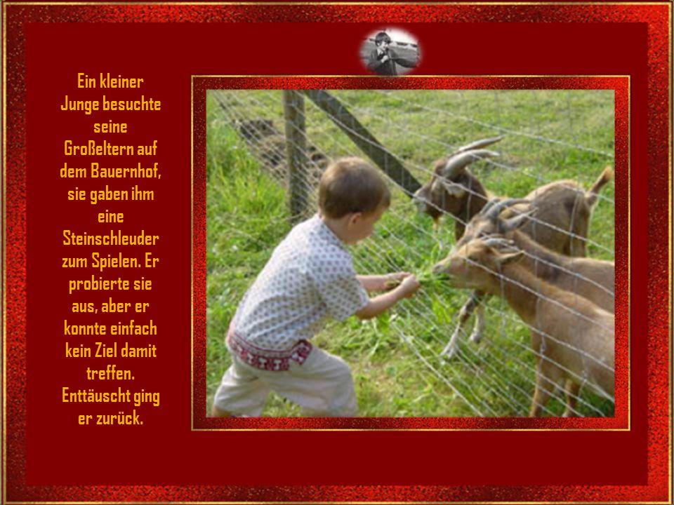 Ein kleiner Junge besuchte seine Großeltern auf dem Bauernhof,