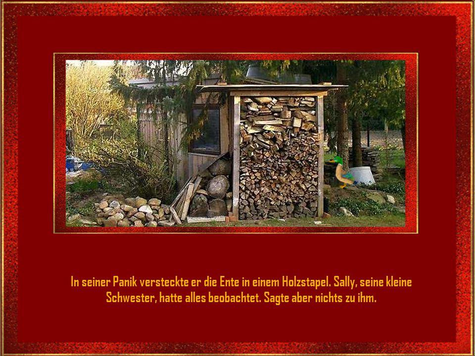 In seiner Panik versteckte er die Ente in einem Holzstapel