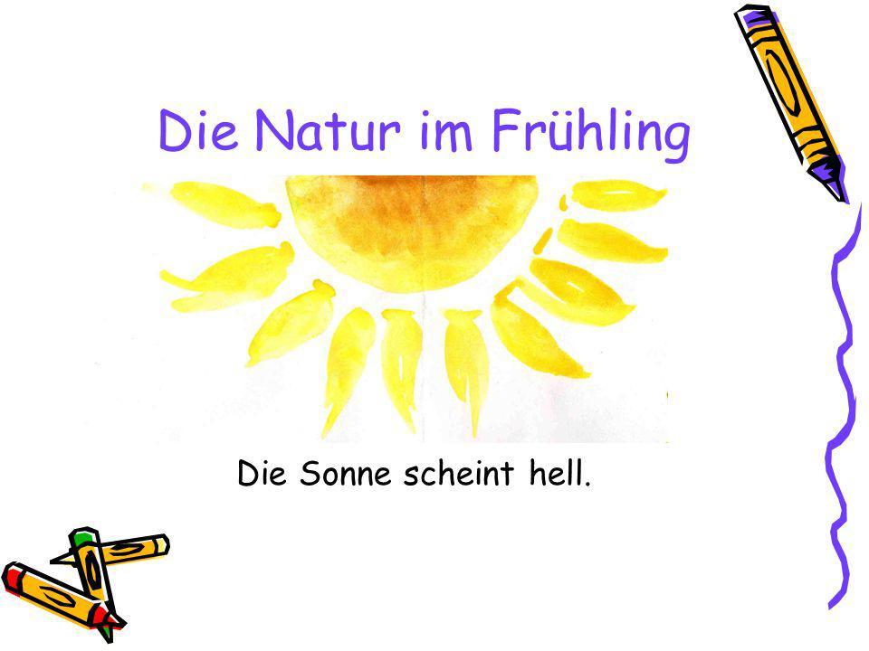 Die Natur im Frühling Die Sonne scheint hell.