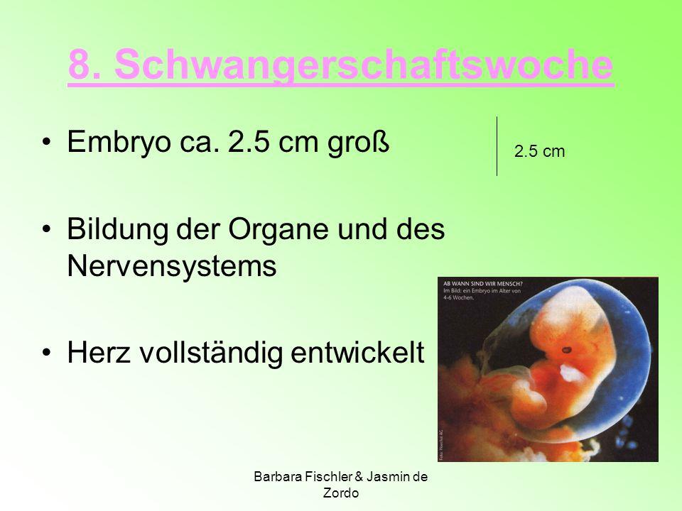 8. Schwangerschaftswoche