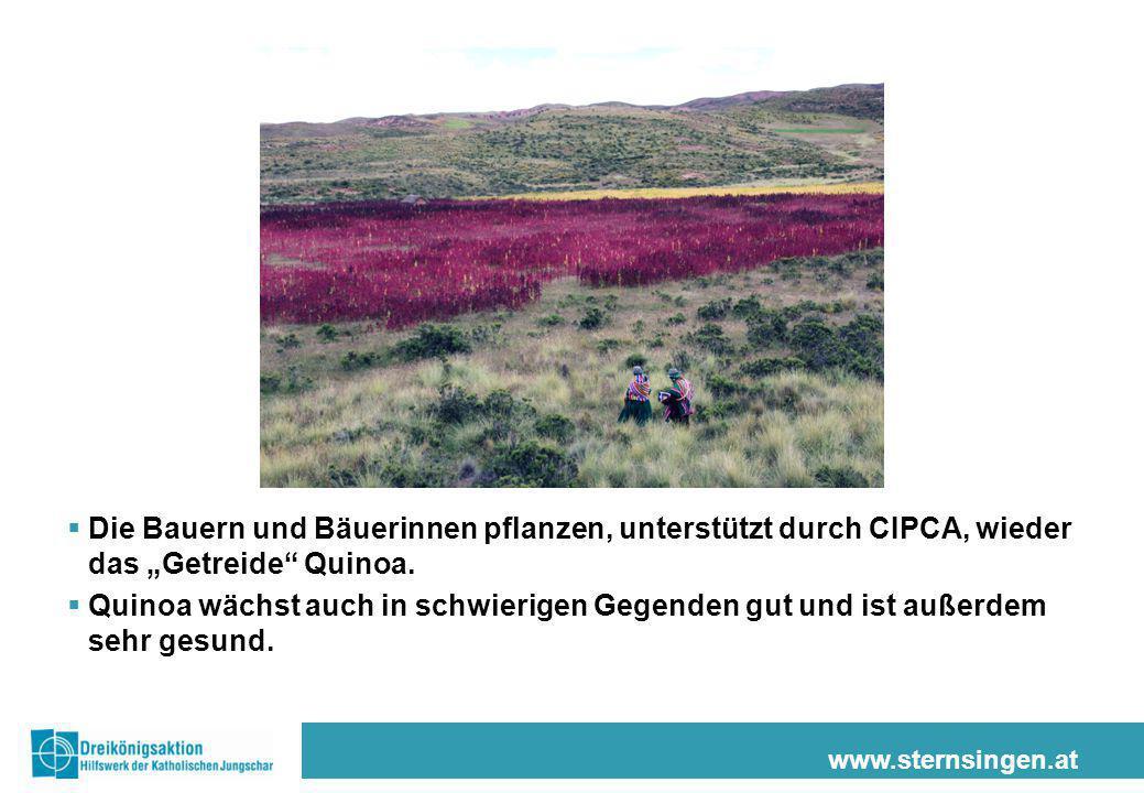 """Die Bauern und Bäuerinnen pflanzen, unterstützt durch CIPCA, wieder das """"Getreide Quinoa."""
