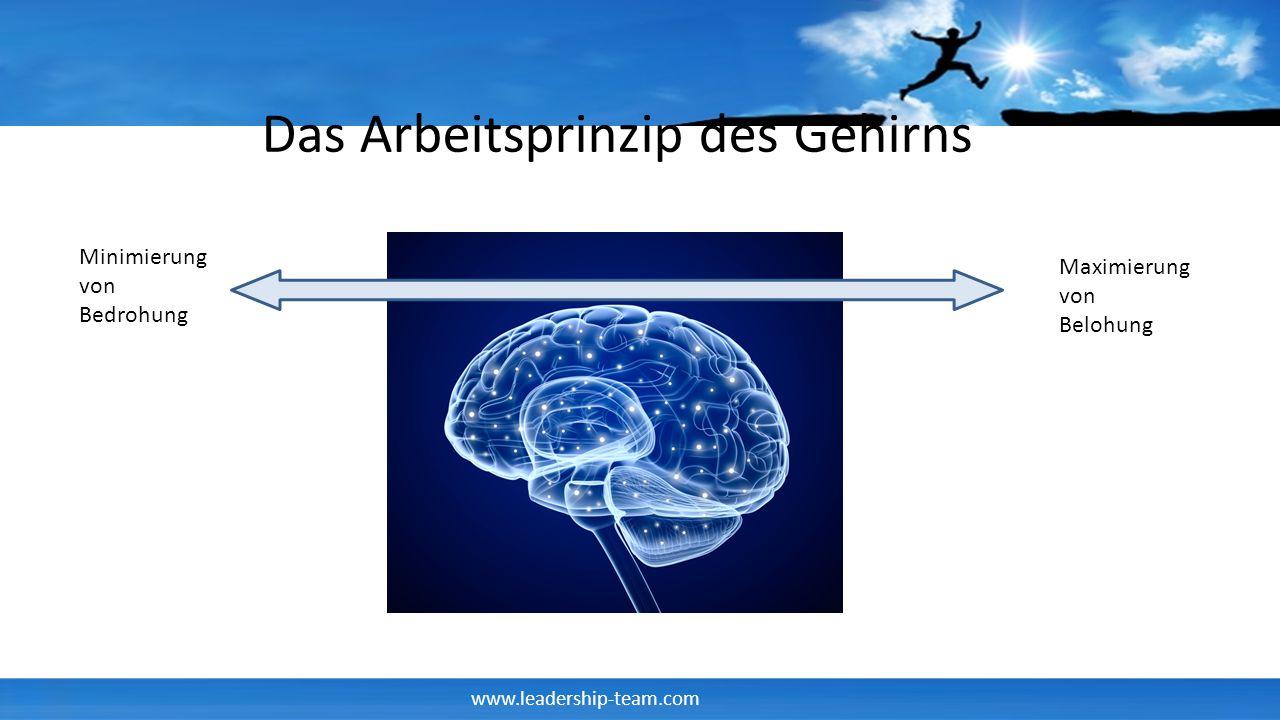 Das Arbeitsprinzip des Gehirns