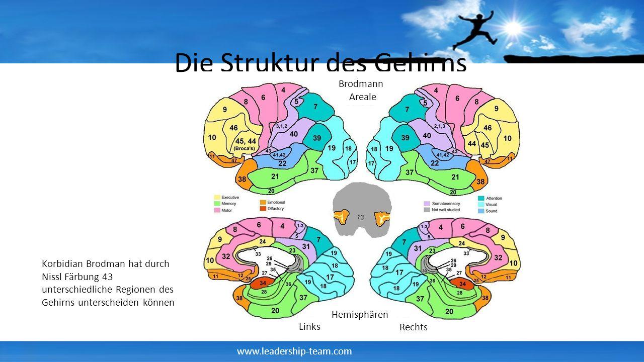 Die Struktur des Gehirns