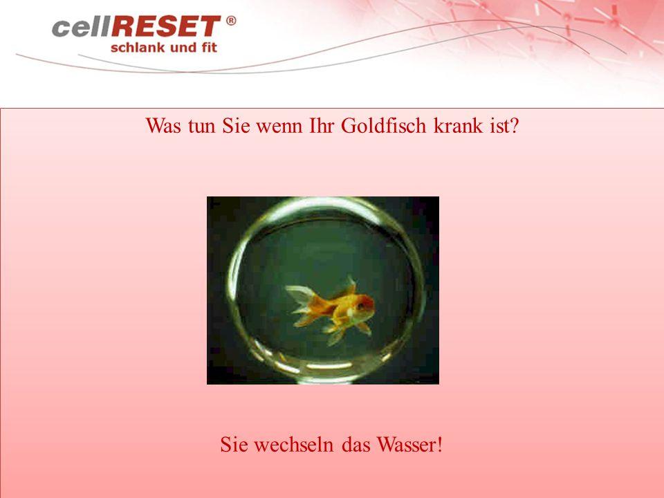 Was tun Sie wenn Ihr Goldfisch krank ist Sie wechseln das Wasser!