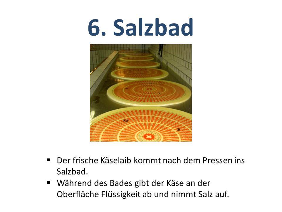 6. Salzbad Der frische Käselaib kommt nach dem Pressen ins Salzbad.