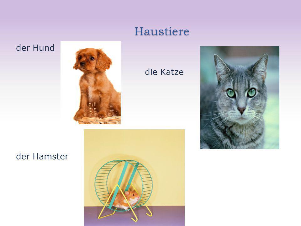 Haustiere der Hund die Katze der Hamster