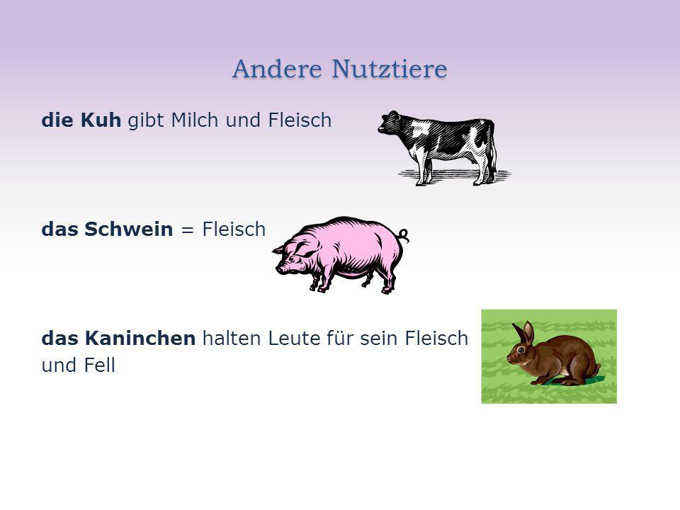 Andere Nutztiere die Kuh gibt Milch und Fleisch das Schwein = Fleisch das Kaninchen halten Leute für sein Fleisch und Fell