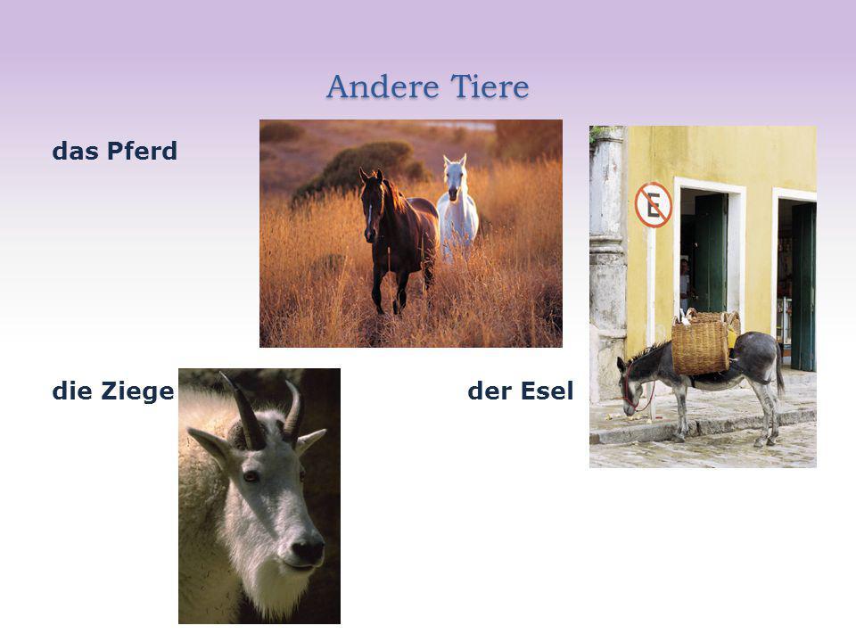 Andere Tiere das Pferd die Ziege der Esel