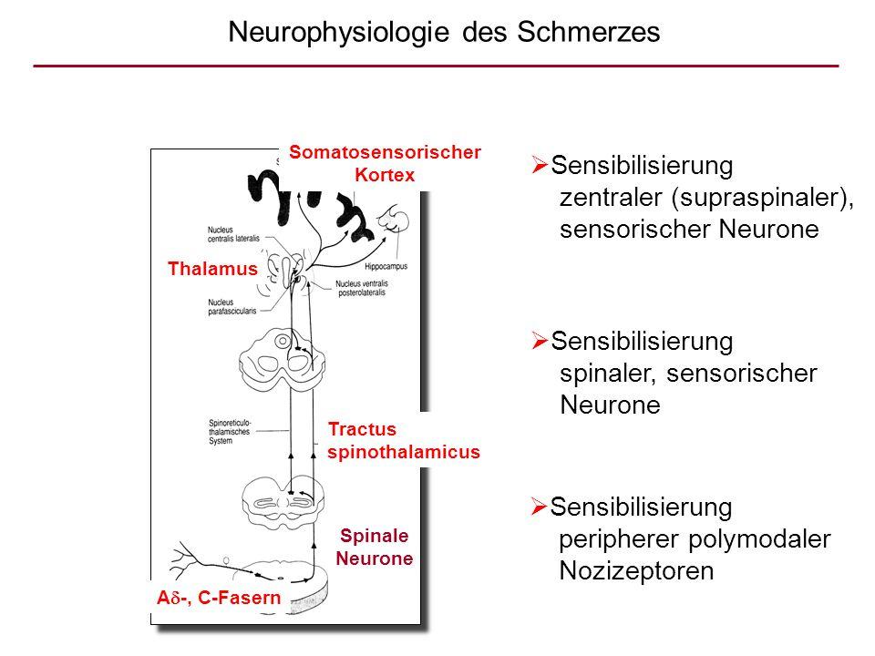 Neurophysiologie des Schmerzes