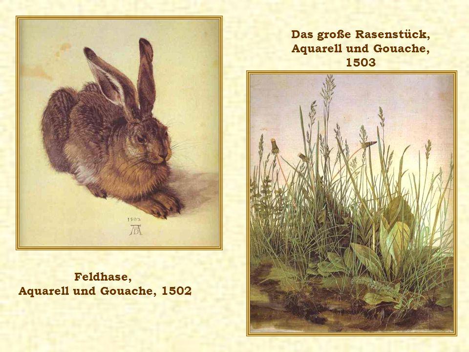 Das große Rasenstück, Aquarell und Gouache, 1503 Feldhase, Aquarell und Gouache, 1502