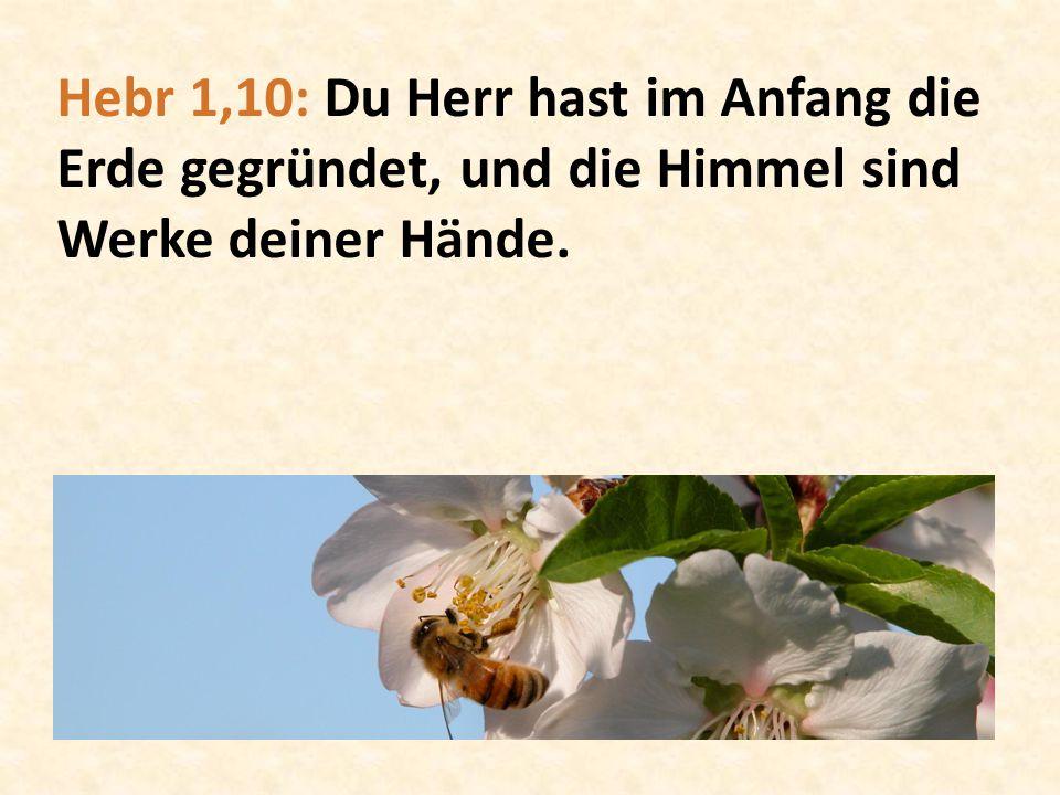 Hebr 1,10: Du Herr hast im Anfang die Erde gegründet, und die Himmel sind Werke deiner Hände.