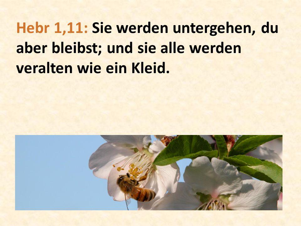 Hebr 1,11: Sie werden untergehen, du aber bleibst; und sie alle werden veralten wie ein Kleid.