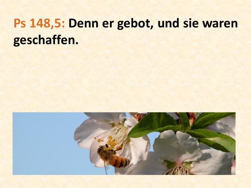 Ps 148,5: Denn er gebot, und sie waren geschaffen.