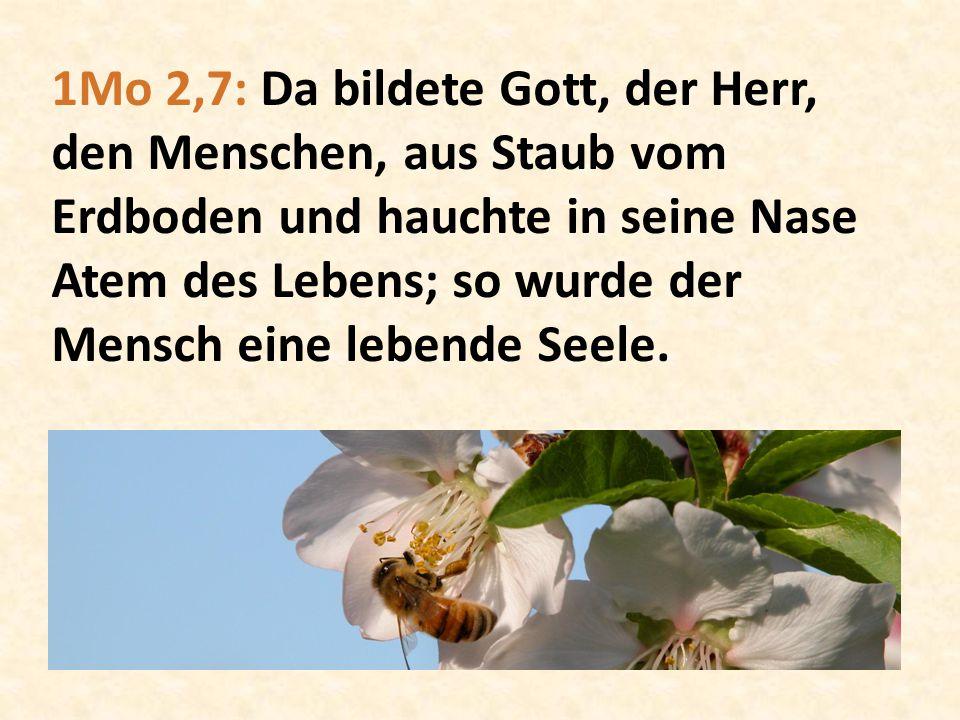 1Mo 2,7: Da bildete Gott, der Herr, den Menschen, aus Staub vom Erdboden und hauchte in seine Nase Atem des Lebens; so wurde der Mensch eine lebende Seele.