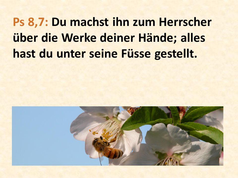 Ps 8,7: Du machst ihn zum Herrscher über die Werke deiner Hände; alles hast du unter seine Füsse gestellt.