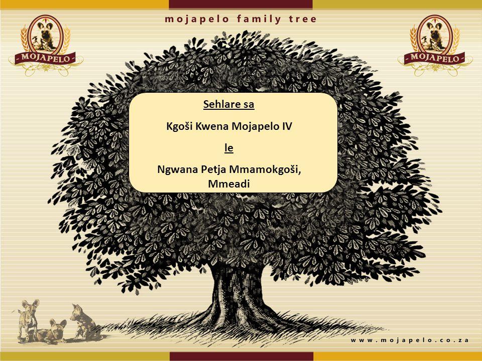 Kgoši Kwena Mojapelo IV Ngwana Petja Mmamokgoši, Mmeadi