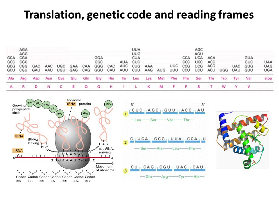 Translation, genetic code and reading frames