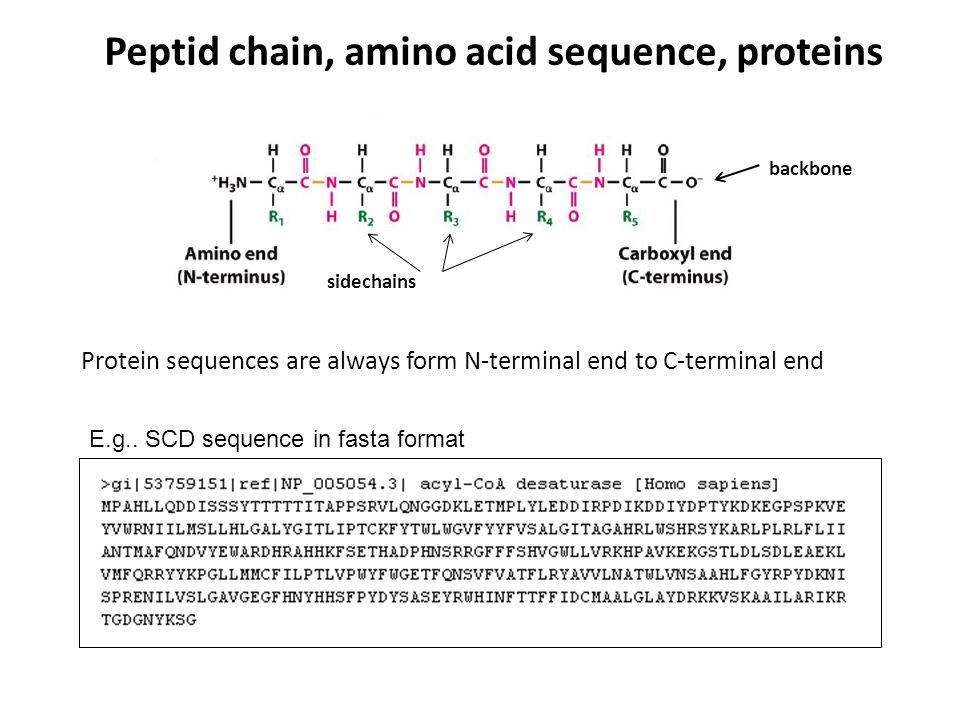 Peptid chain, amino acid sequence, proteins