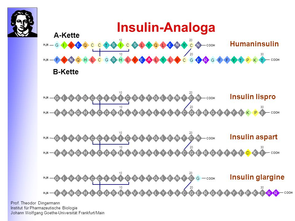 Insulin-Analoga A-Kette Humaninsulin B-Kette Insulin lispro