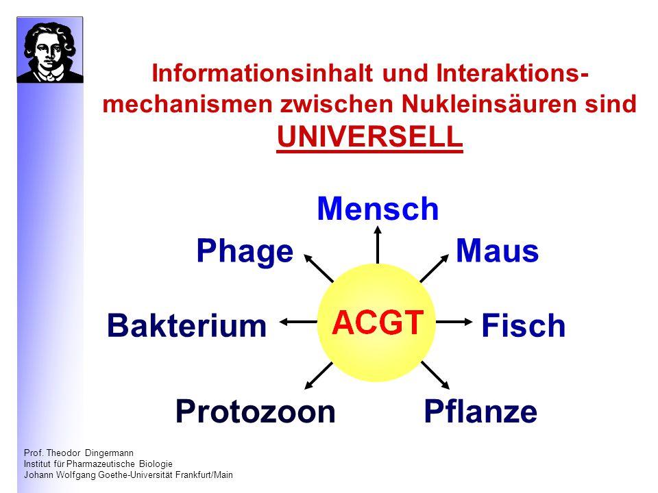 Mensch Phage Maus Bakterium Fisch Protozoon Pflanze