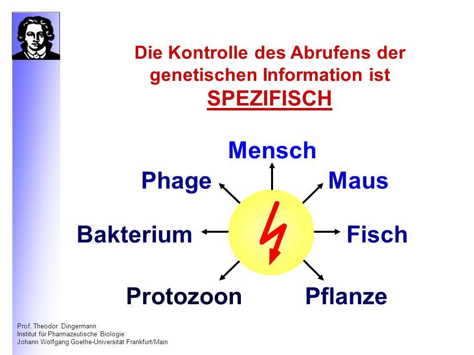 Die Kontrolle des Abrufens der genetischen Information ist