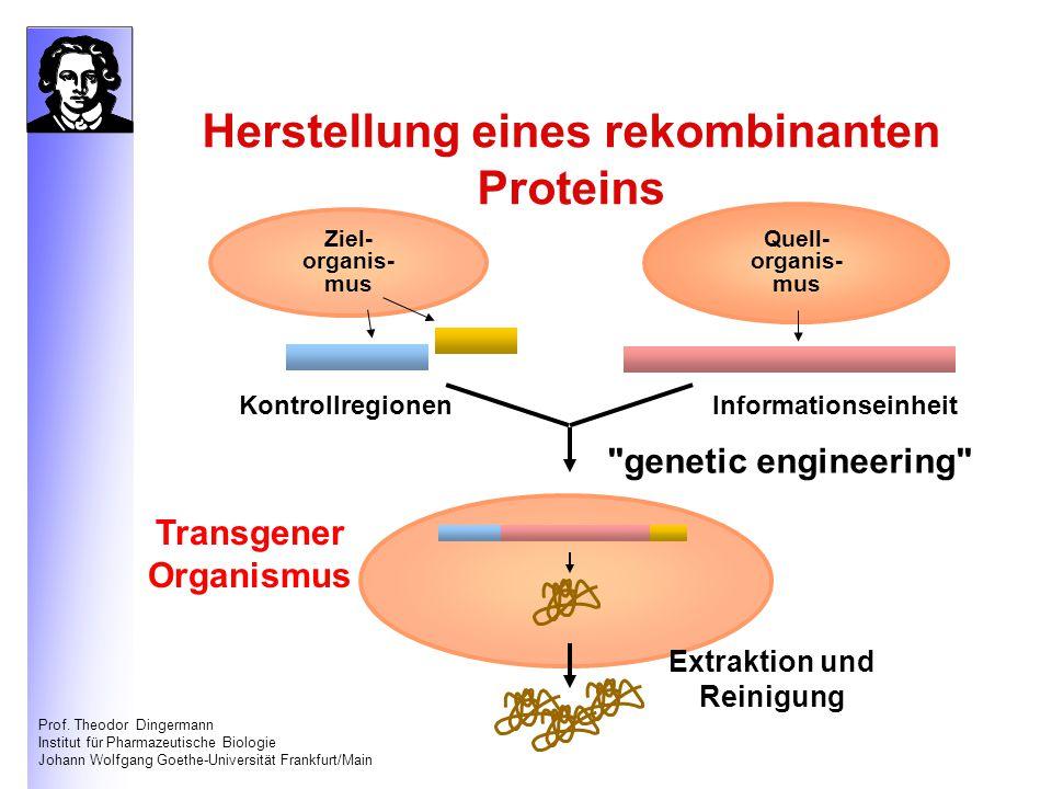 Herstellung eines rekombinanten Proteins