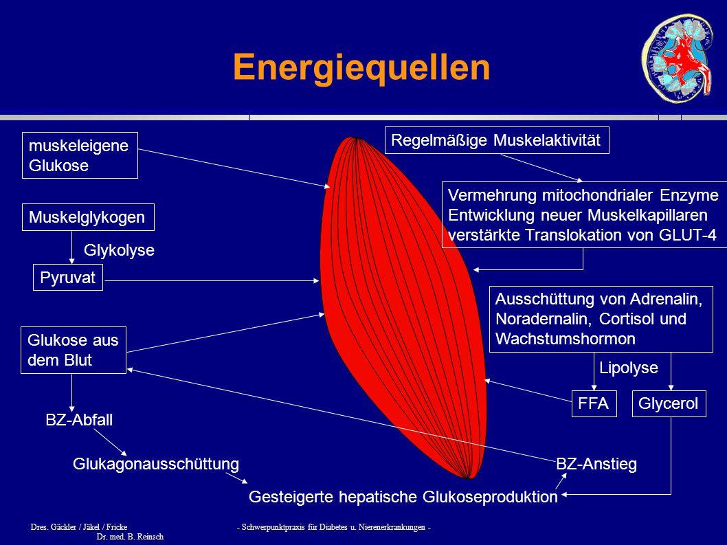 Energiequellen Regelmäßige Muskelaktivität muskeleigene Glukose