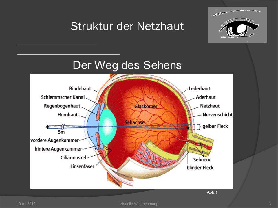 Struktur der Netzhaut Der Weg des Sehens Abb.1 08.04.2017