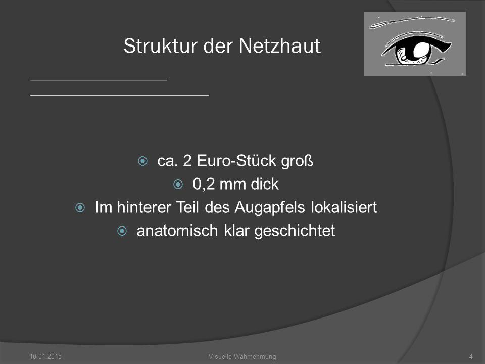 Struktur der Netzhaut ca. 2 Euro-Stück groß 0,2 mm dick