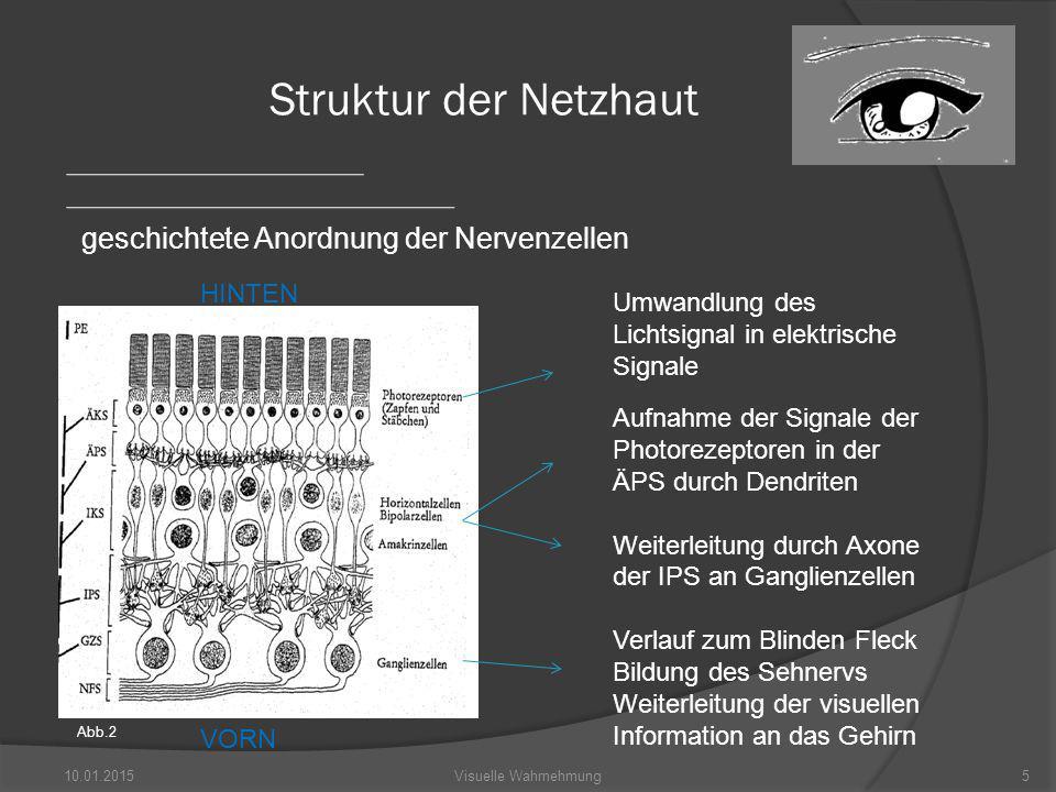 Struktur der Netzhaut geschichtete Anordnung der Nervenzellen HINTEN