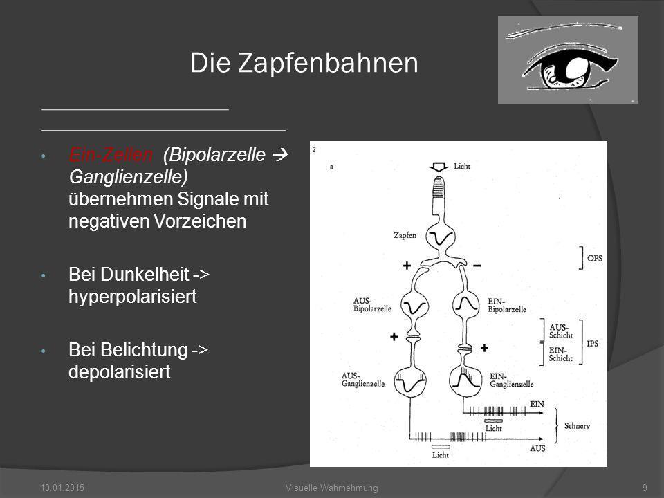 Die Zapfenbahnen Ein-Zellen (Bipolarzelle  Ganglienzelle) übernehmen Signale mit negativen Vorzeichen.