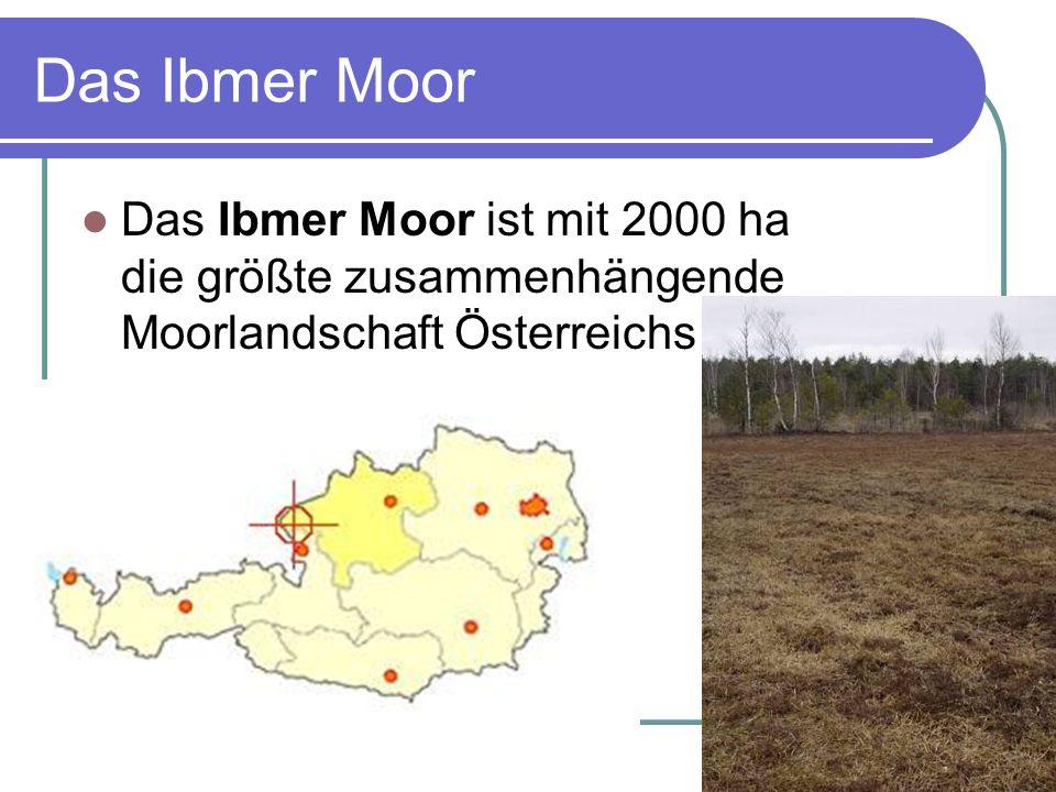 Das Ibmer Moor Das Ibmer Moor ist mit 2000 ha die größte zusammenhängende Moorlandschaft Österreichs.