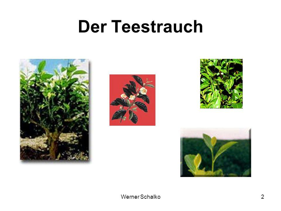 Der Teestrauch Werner Schalko