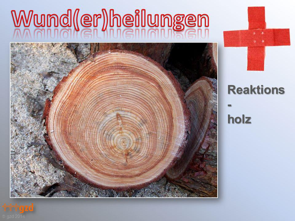 Reaktions- holz