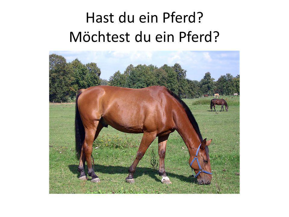 Hast du ein Pferd Möchtest du ein Pferd