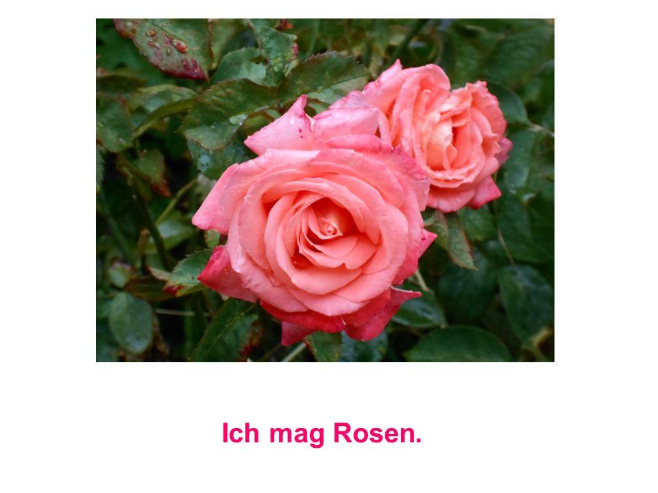 Ich mag Rosen.